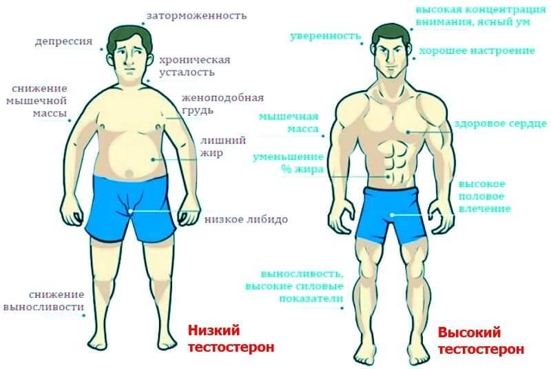 Признаки снижения тестостерона у мужчин