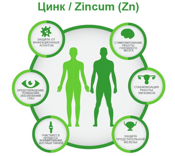 Роль цинка в организме